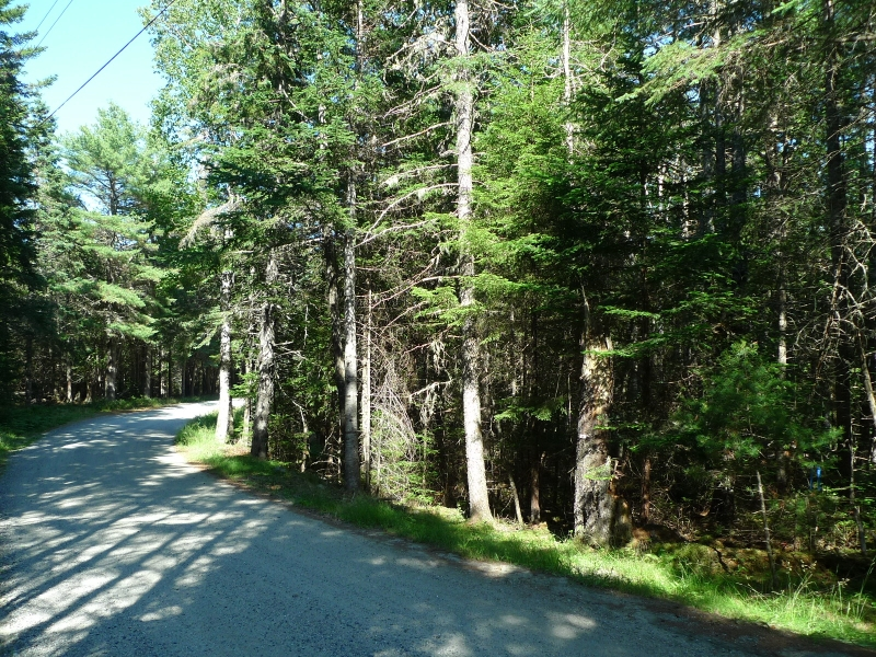 Tamarack Lane/BEAUTIFUL SOMESVILLE LAND PARCEL