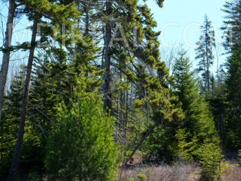 Bass Harbor Woods Land Parcels/FABULOUS!!!