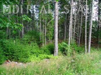 Somes Ridge Parcel//FABULOUS MOUNT DESERT LAND LISTING!!!
